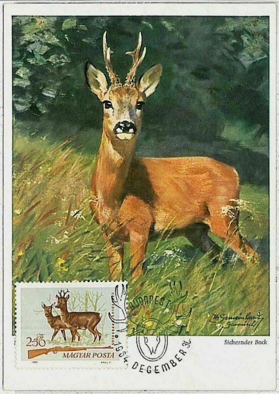 32114 - HUNGARY - POSTAL HISTORY - MAXIMUM CARD  Deer HUNTING FaunaI 1964
