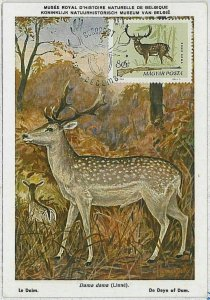 32199  - HUNGARY - POSTAL HISTORY - MAXIMUM CARD  Deer HUNTING FaunaI 1964