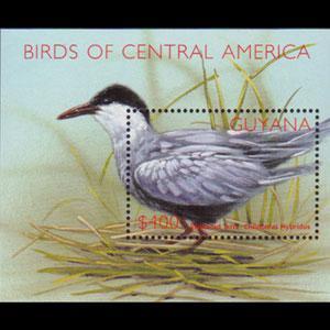 GUYANA 2002 - Scott# 3723 S/S Bird-Tern NH