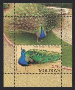 Moldova Peacock Zoological Garden MS