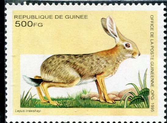 Guinea 1995 AFRICAN HARE 1 value Perforated Mint (NH)