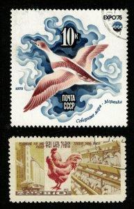 Birds, (3330-T)