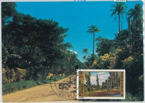 62869 - New Caledonia   Nouvelle-Calédonie -  MAXIMUM CARD 1973 PLAM TREES