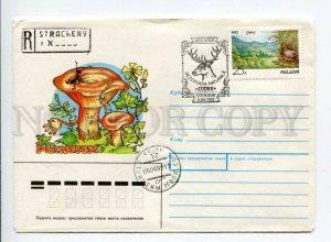 412964 MOLDOVA 1992 year Usova mushroom special cancellations COVER Deer