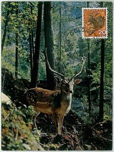 32195 - SWIZZERLAND  - POSTAL HISTORY - MAXIMUM CARD - FAUNA Deers  ANIMALS 1965