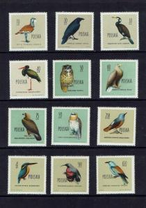 Poland: 1960, Birds, MNH set
