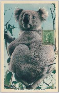 52156 - AUSTRALIA -  MAXIMUM CARD - 1958  ANIMALS:  KOALA