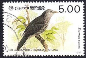 Sri Lanka # 838 used ~ 5r White-headed Starling