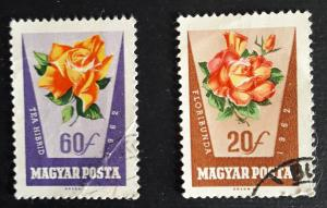 Flowers, 1962, (22-Т)
