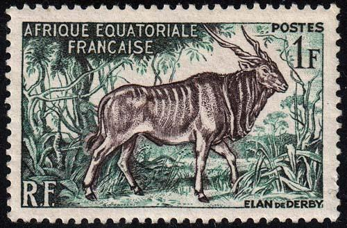 French Equatorial Africa - Scott 195 - Mint-Never-Hinged