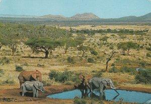 10967 Ansichtskarte Postcard EAST AFRICAN WILDLIFE ELEPHANTS KENYA