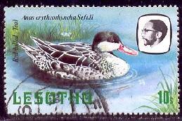 Bird, Red-Billed Teal, Lesotho stamp SC#327 used
