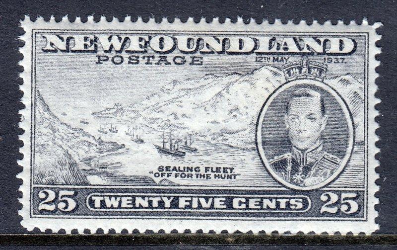 Newfoundland - Scott #242 - MNH - Crease - SCV $4.50