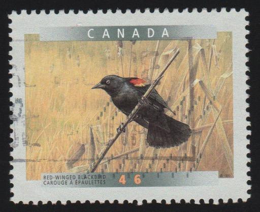 1771 Red Winged Black bird
