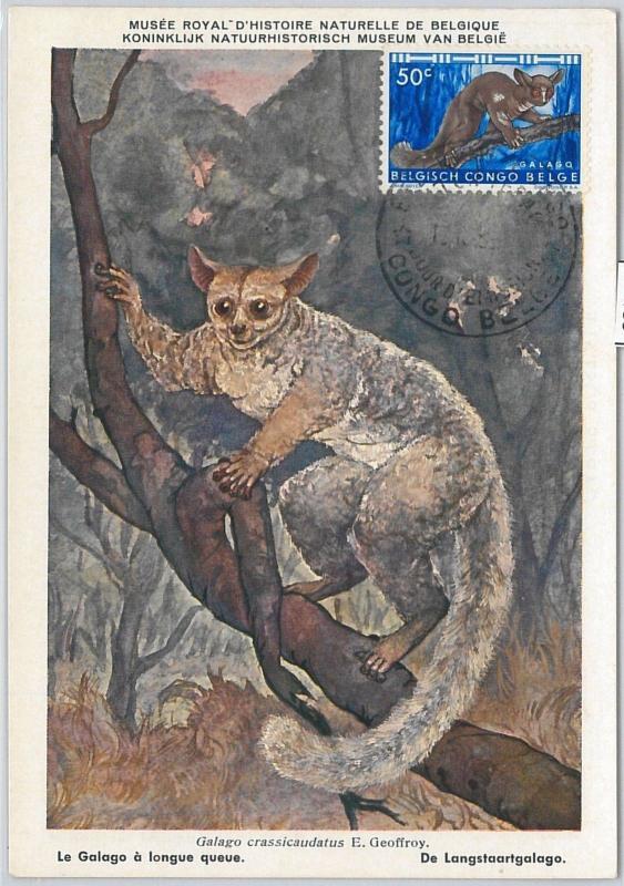 52189  - Belgian CONGO BELGE  -  FDC  MAXIMUM CARD - 1956  ANIMALS: bushbabies