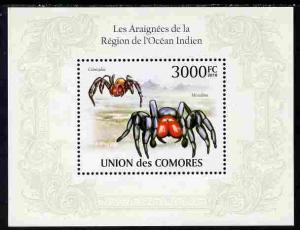 Comoro Islands 2010 Spiders from the Indian Ocean Region ...