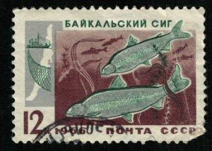 Fish, 12 kop (T-6864)