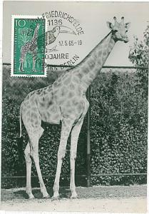 MAXIMUM CARD - POSTAL HISTORY -  Germany: Giraffes, BIRDS, TOUCAN, 1965