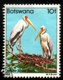 Bird, Yellow-Billed Storks, Botswana SC#311 used