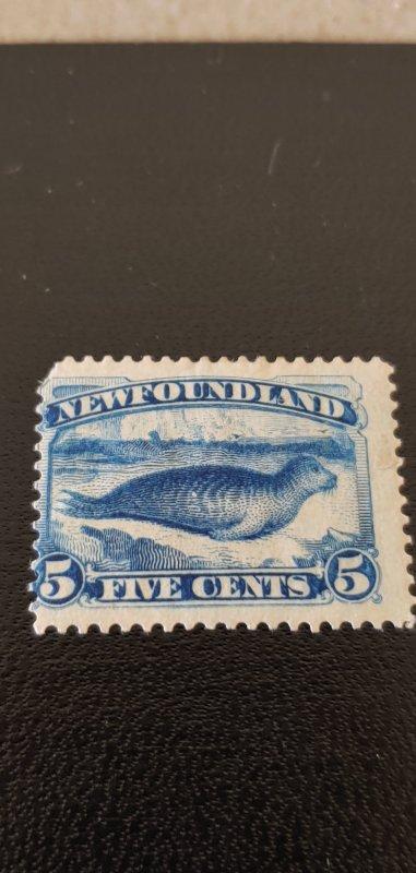 New Foundland #55 MH