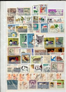 Poland Mid Period used (Appx 300 Stamps)Kul 768