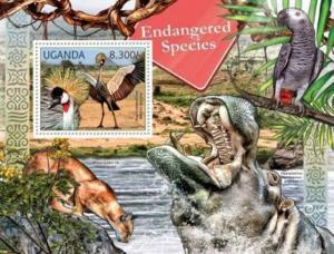 Uganda - African Endangered Species - Black Crowned Crane - 21D-008