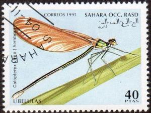 Western Sahara (Unlisted) - Cto - 40pt Dragonfly (1995)