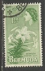 BERMUDA 145 VFU FLOWER 720B-9