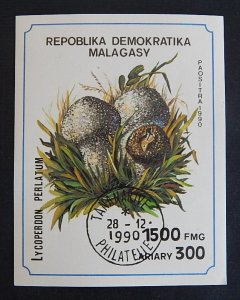 Mushrooms, Democratic Republic of Madagascar, (2342-T)