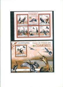 COMORES 2009 - BIRDS - LES ANHINGIDAES