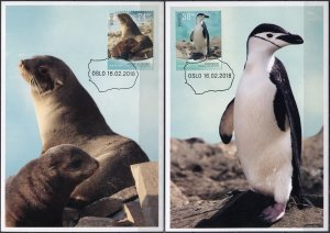 Norway. 2018. Fauna of Bouvet Island (Mint) Set of 2 Maxi Cards
