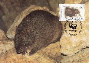 Jamaica 1996 Maxicard Sc #857 $2.50 Jamaican Hutia WWF