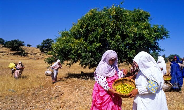 Berber women collect Argan fruits