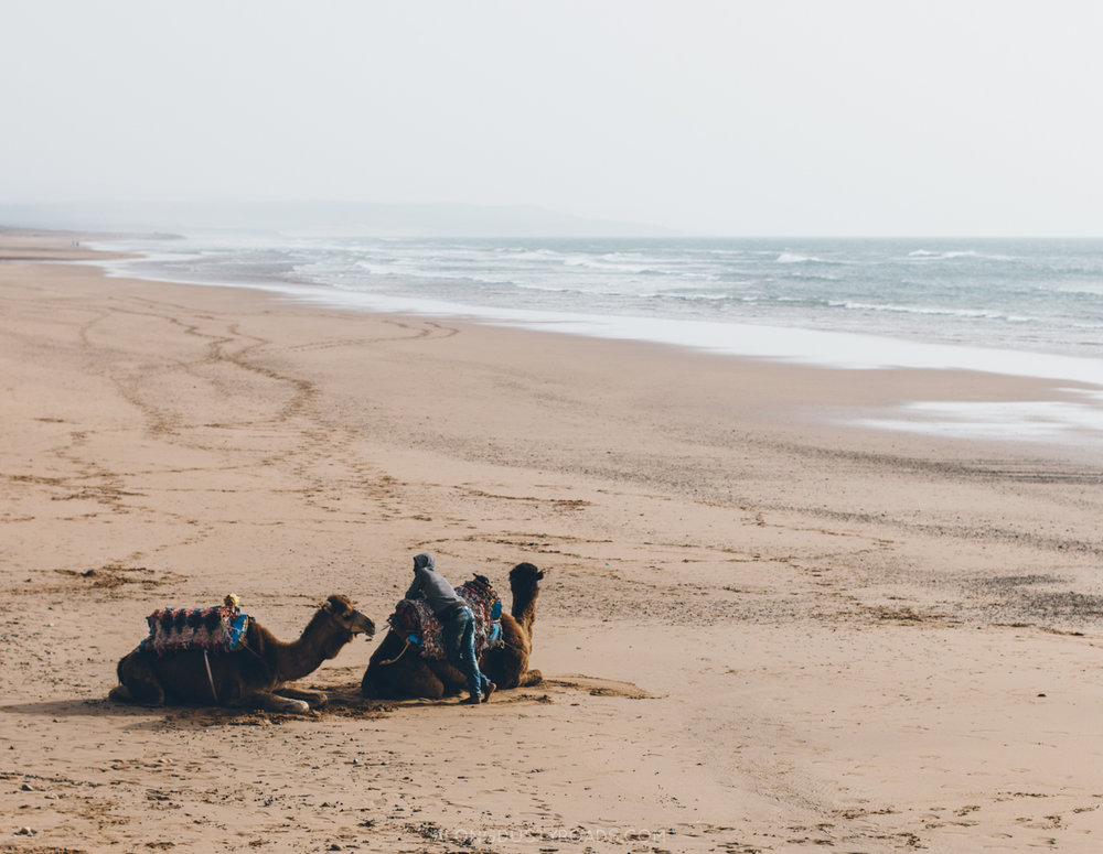 sidi kaouki camels