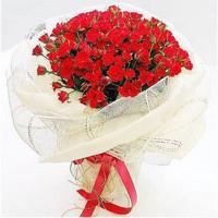 紅色康乃馨花束  貨號#K003