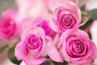 玫瑰香味 50ml Rose