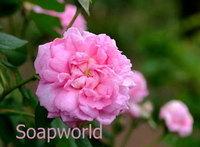 玫瑰精油1% 10ml