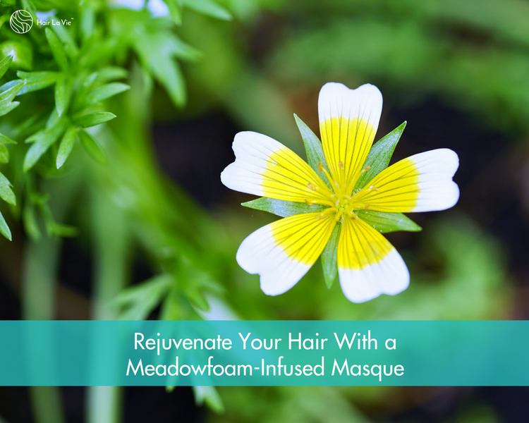 The Tantalizing Shine of Hair Benefits: Organic Meadowfoam Seed Oil