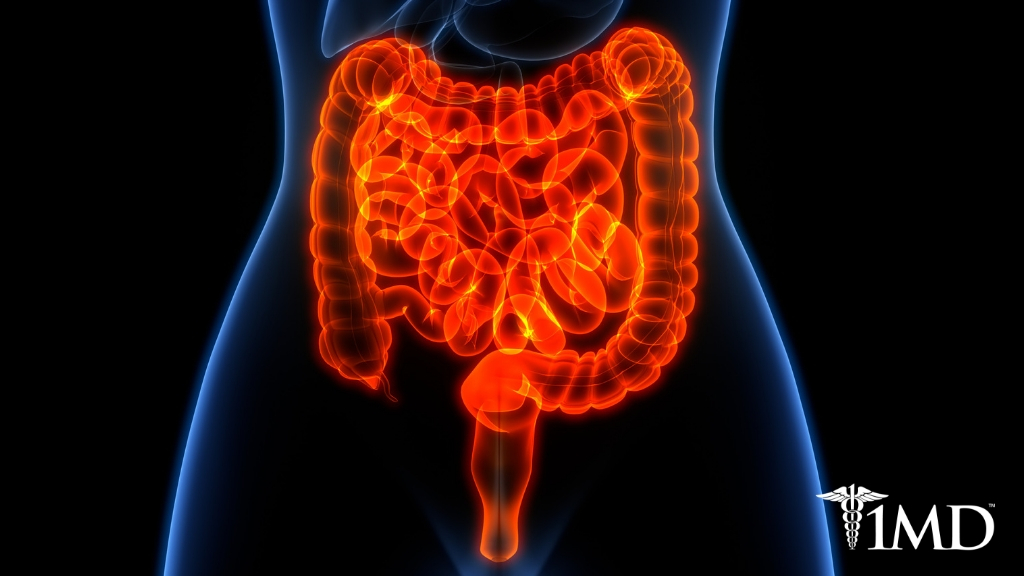 Leaky Gut Syndrome 101: Symptoms, Causes, Treatment, and Prevention