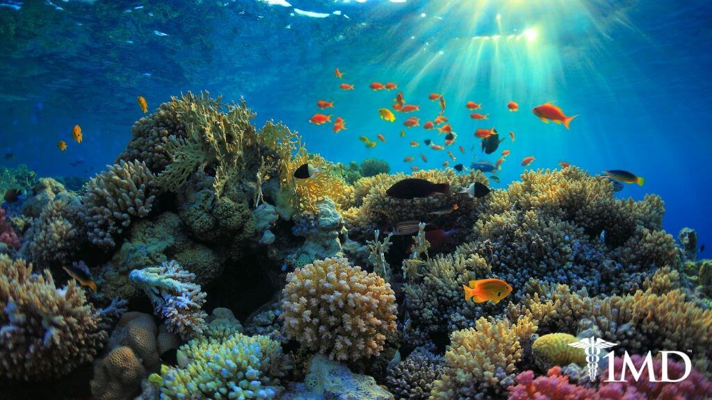 5 Best Reef-Safe Sunscreen Tips to Protect Your Skin and the Oceans