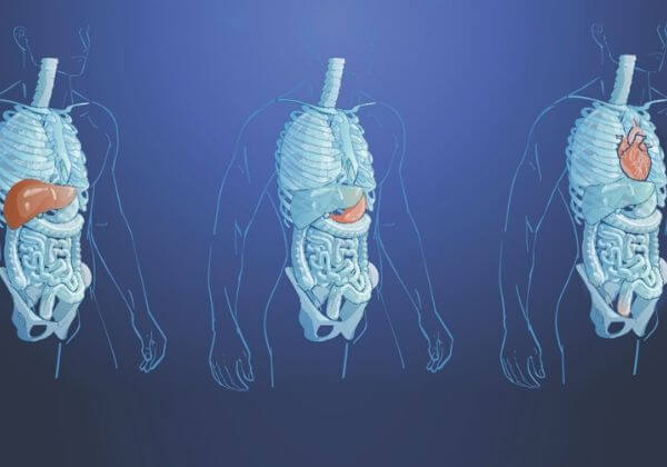 Hemochromatosis: Symptoms, Treatment, and Long-Term Outlook