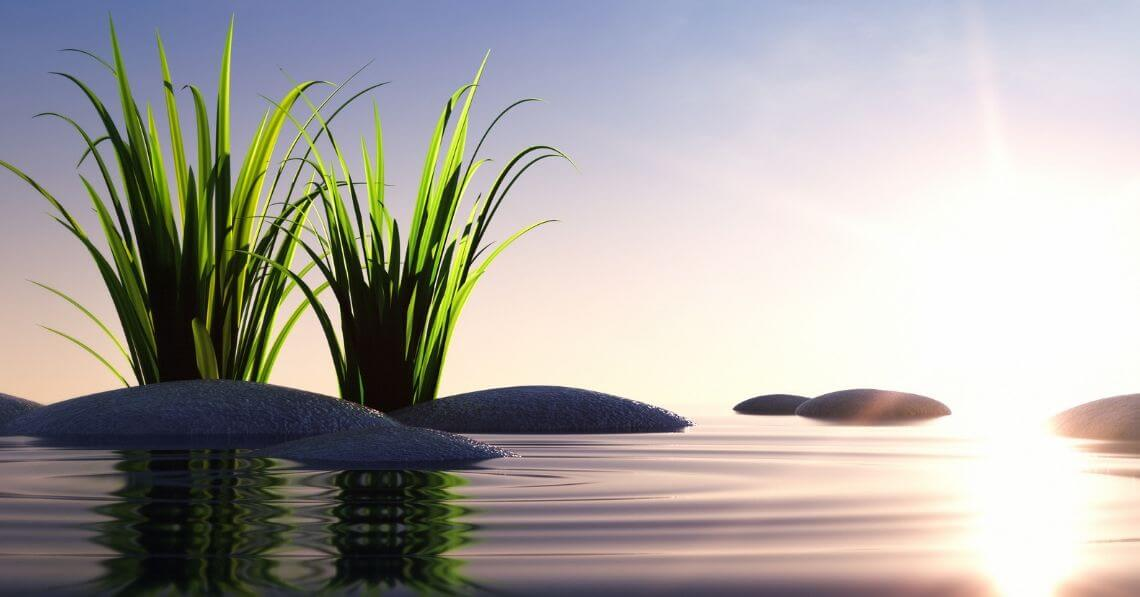 International Peace Day Morning Ritual: 5 Simple Steps to a Zen Day