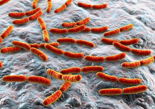 Lactobacillus Rhamnosus: Health Benefits and Possible Side Effects