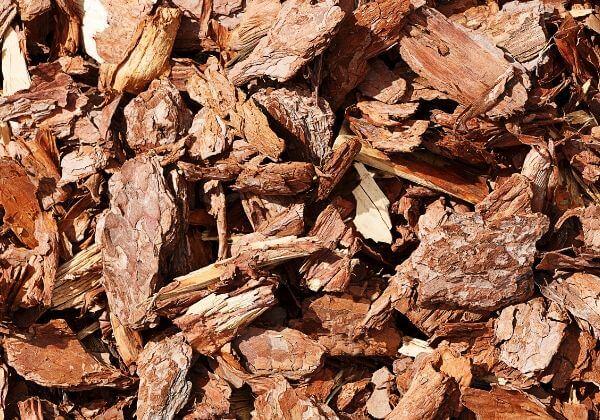 Pine Bark Benefits - Men's Health Ingredients - 1MD
