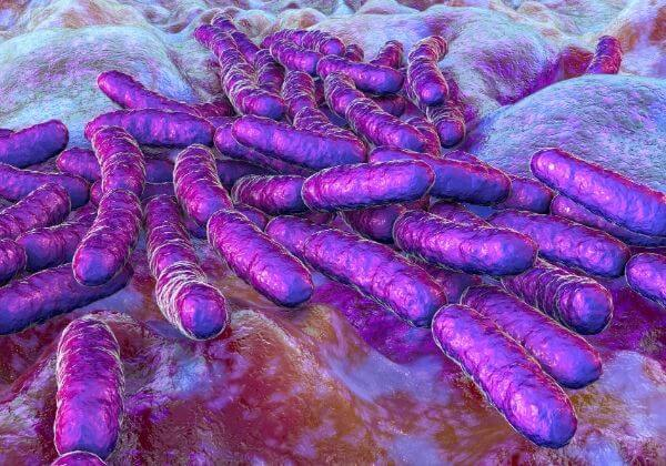 Lactobacillus Rhamnosus GG: How It Promotes Healthy Digestion