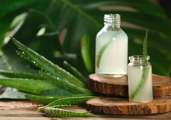 7 Ways Aloe Vera Benefits Your Health as a Natural Remedy and More