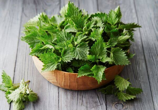 What is Stinging Nettle? - Men's Health Ingredients - 1MD
