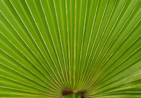 USPlus Saw Palmetto: Everything You Need to Know