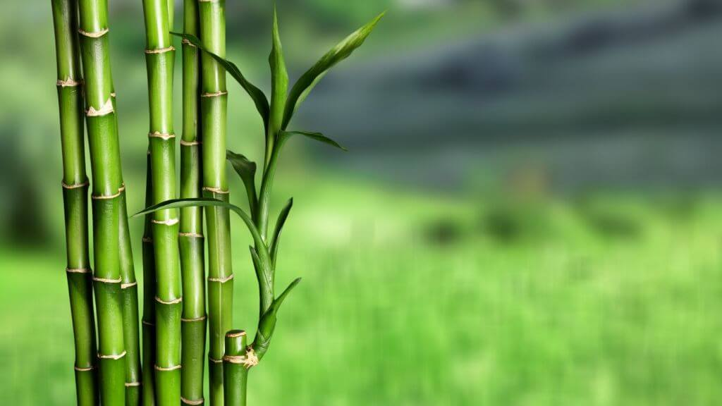 The story of bamboo and the secret to hair sheen