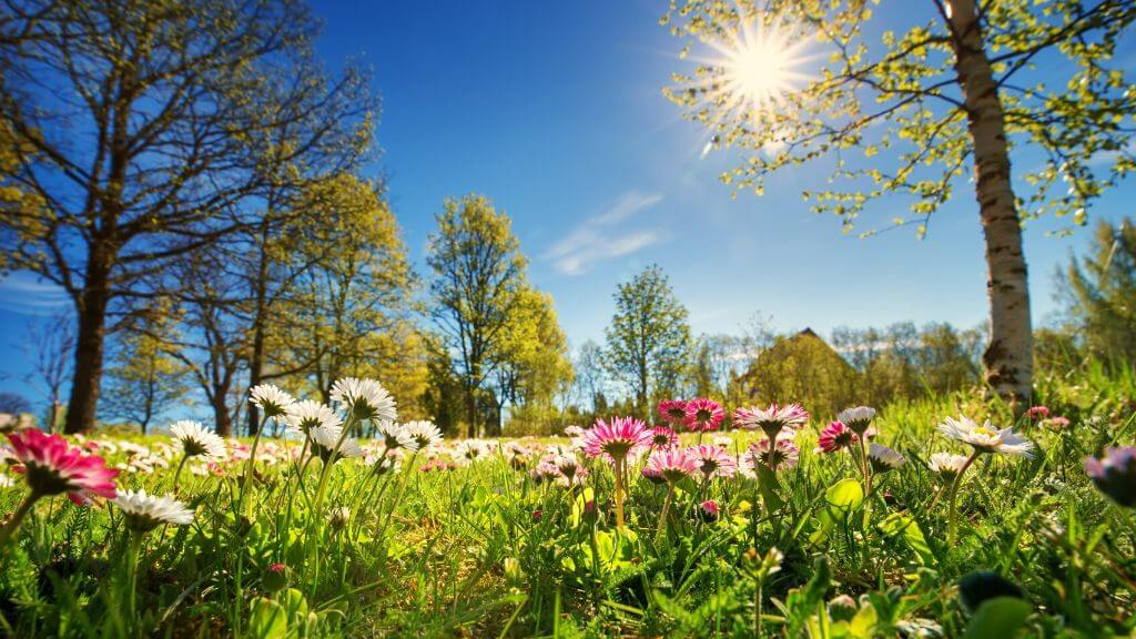The hair-enhancing benefits of spring superfoods and flowers
